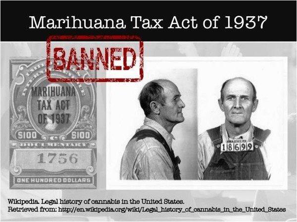 History of Marijuana 4